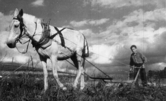 Farmer Plow